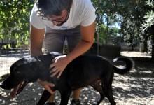 """Andria – Canile Lillo&Lillo: """"un animalista agguerrita sta cercando di screditarci"""""""