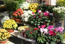 """Trani – Diffidati i fiorai del cimitero: """"I fiori si vendono solo di domenica mattina e lunedì pomeriggio"""""""
