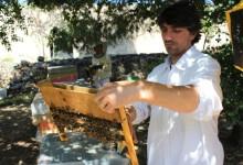 Barletta – Il treno verde di Legambiente per difendere le api in città