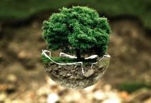 Imballaggi ecologici: dalla carta alla bio-plastica, il futuro del packaging è green
