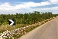 Sp33 Andria-Bisceglie: asta per gli alberi di ulivo da espiantare
