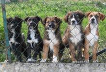 Andria – Adozione cani: mercoledì 1 giugno conferenza stampa sito promozione