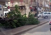 Andria – Via Puccini: Alberi sui passanti a causa del vento