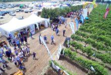Corato – Enovitis in campo 2016: protagonisti i vini Doc Castel del Monte e l'olio evo Dop Terra di Bari