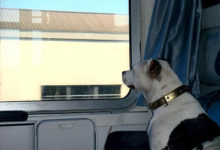 """Cani in carrozza a 5 euro. Trenitalia: """"Contro l'abbandono"""""""