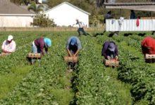 """PUGLIA – Agricoltura, M5S ai Prefetti : """"tutelare i braccianti nelle ore più calde della giornata"""""""