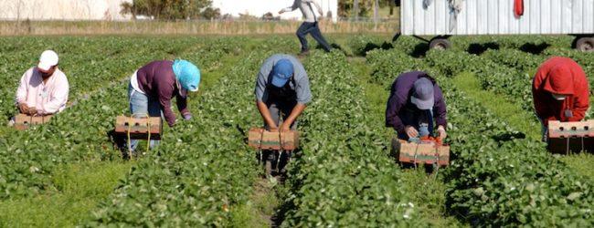"""Agricoltura in Puglia, Stea: """"Sì ai controlli, ma con buon senso"""""""