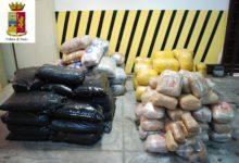 Puglia – Sequestrati oltre 700 kg di marijuana. Arrestato un albanese