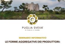 """""""VinOlio"""": seminario informativo sulle aggregazioni dei produttori a Corato il 1 dicembre"""