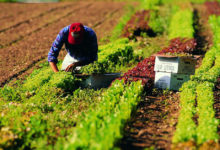 Foggia – Econometria applicata nel settore Agri-food: la Summer School targata UniFg