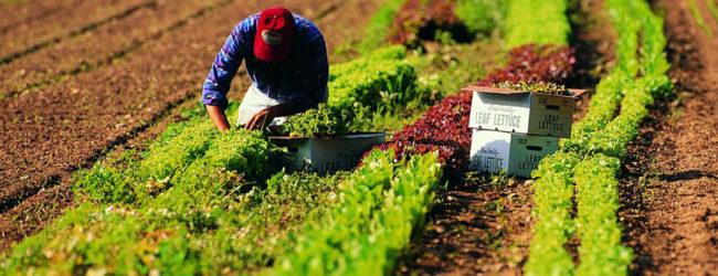 Puglia – M5s pubblica bando per la ricerca di un collaboratore legislativo esperto di agricoltura e turismo