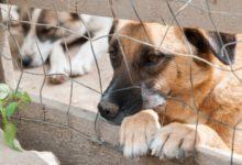 """Trani – Campagna """"Portami con te"""" per incentivare adozione cani randagi"""