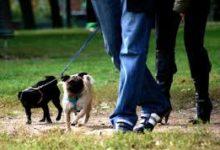 Barletta – Un'ordinanza sindacale sulle regole per la custodia dei cani. Ai trasgressori multe sino a 500 euro