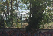 Incidente ferroviario sulla tratta Trani-Bisceglie: vittima una donna