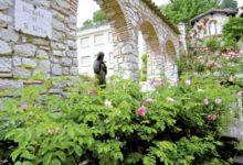 Andria – Le piantine di Santa Rita: raccolti 1515 euro