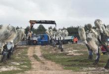 TAP, Trevisi (M5S) presenta interrogazione su un pozzo inquinato nel terreno che ospita gli ulivi espiantati dal cantiere
