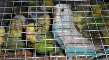 Molfetta – Sequestro carico 300mila animali esotici