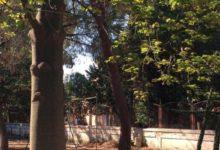 Bisceglie – Giardino Botanico: le attività di luglio