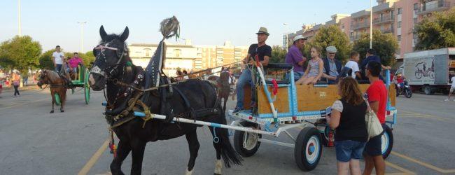Giovinazzo – Domani Esibizione equestre di cavalli, traini e carrozze