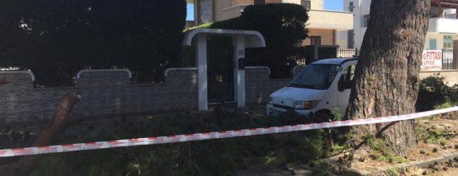 Trani – Cade ramo di pino, danneggiata auto