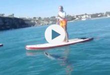 VIDEO. Trani – Avvistato delfino alle Matinelle