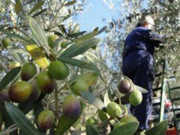 Puglia – Furti nelle campagne: Stea chiede la polizia rurale