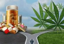 Barletta – Cannabis, M5S: domani incontro informativo su proprietà terapeutiche