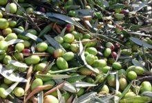 Protesta olivicoltori: i commenti dei partecipanti