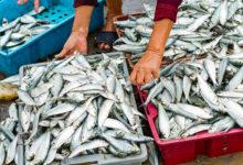 Margherita di Savoia – Sequestrati 50 kg di prodotto ittico non tracciabile