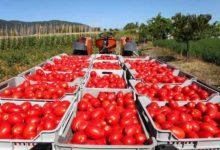 Regione Puglia: no alla richiesta di IGP 'Pomodoro Pelato di Napoli'
