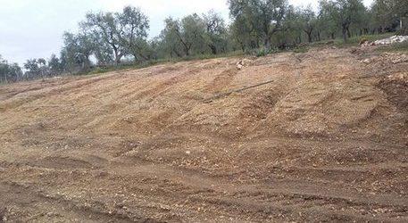 Andria – Particelle catastali proprietari terrieri: 120 giorni per presentare ricorso ad Agea