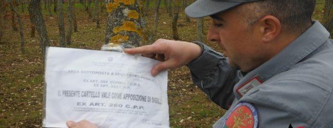 Andria – Taglio abusivo di querce nel parco Alta Murgia