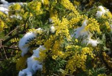 Puglia – Dalla siccità alle gelate: l'agricoltura fa la conta dei danni