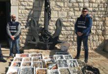 Barletta – Capitaneria: sequestrato 200 Kg di pesce in cattivo stato di conservazione