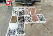 Barletta – Sequestro di  prodotti ittici. Operazione della Capitaneria di Porto