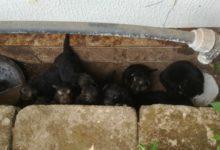 Andria – Nerina e suoi cuccioli cercano casa: in dono a famiglie interessate