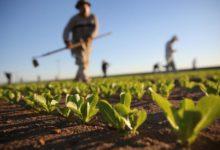 """Montegrosso – Confronto imprenditori agricoli e politici: invitati """"operai, amici e familiari"""""""