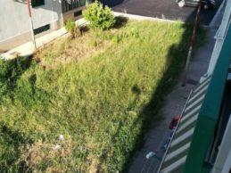 """Andria – Quartiere san valentino: """"La politica avanza lentamente mentre l'erba cresce velocemente"""""""