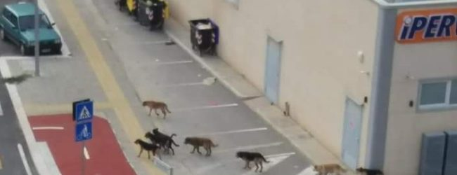 """Barletta – Movimento Animalista, Avv. Vaccariello: """"Avvistato branco di cani, si richiede incontro!"""""""