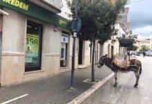 Puglia – Parcheggia l'asino e si reca in banca: l'episodio curioso accaduto nel foggiano