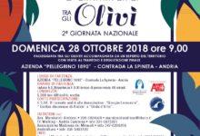 "Andria – 28 ottobre: ""Camminata tra gli Olivi 2^ giornata nazionale"""