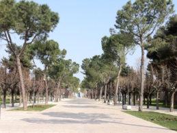 Andria – L'abete della libertà: piantumazione in Villa Comunale