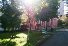 """Barletta – Enpa, Legambiente e Beni Comuni: """"Chiarimenti in merito alla tutela del verde pubblico urbano"""""""