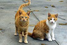Margherita di Savoia – Moria di gatti in città: l'intervento del Sindaco