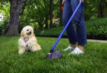 Barletta – Deiezioni canine e norme per i proprietari dei cani, continuano le sanzioni