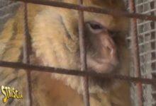 """Andria ritorna su """"Striscia la Notizia"""": stavolta per una scimmietta detenuta in un garage. Ecco il video"""