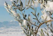 Interventi dei senatori Messina (PD) e Damiani (FI) sui problemi dell' agricoltura