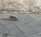 Trani – Degrado urbano: un topo a spasso per la città. IL VIDEO