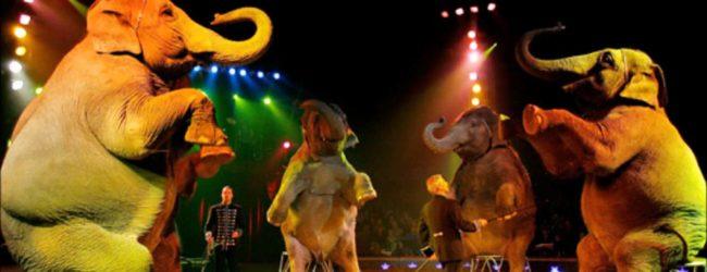 """Barletta – Comitato """"Animali Liberi"""" chiede opportuni controlli nei circhi"""