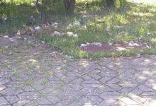 Andria – Grandi pulizie nel Parco Europa dopo la pubblicazione delle immagini dello scempio ambientale